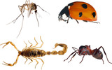 four isolated color insects collection illustration
