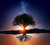 Starry night and tree . Mixed media - Fine Art prints