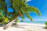 Beautiful tropical beach - 128029513