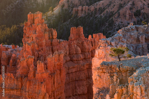 Fotobehang Natuur Park Scenic view of stunning red sandstone in Bryce Canyon National P