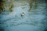 Селезень на пруду   - абстракция
