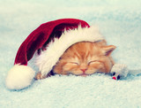 Little red kitten wearing Santa hat sleeping on a blanket