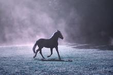 Fantastique soleil du matin prairie avec cheval brun et de brouillard de couleur pourpre.