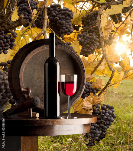 Fototapeta still life with red wine on vineyard background
