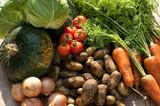 収穫した野菜 - 128139968