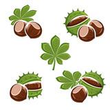 Chestnut set. Vector