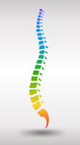 Human spine. Rainbow gradient colored backbone