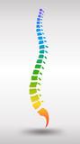 Human spine. Rainbow gradient colored backbone