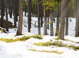 UNDERWOOD WITH SNOW AND HUMUS