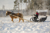 Horse and sleight in winter