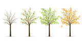 Tree in four seasons - winter, spring, summer, autumn. Vector il