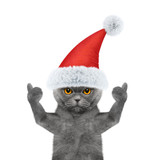 Santa cat showing thumb up and welcomes