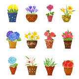 Fototapety collection of flowers planted in ceramic pots for your design