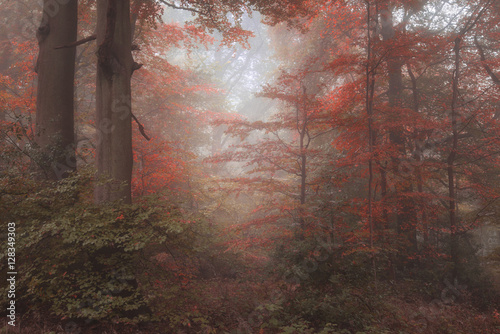 Papiers peints Cappuccino Beautiful surreal alternate color fantasy Autumn Fall forest lan