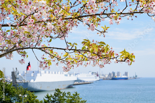 Poster Cherry blossoms and the harbor.