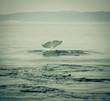 Beluga Diving