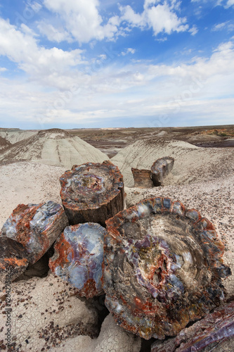 Foto op Aluminium Route 66 Petrified wood at Petrified Forest National Park, Arizona