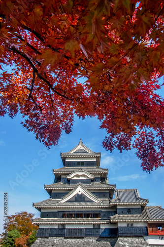 Poster Matsumoto Castle in Autumn with Red Maple Leaf on Sunny Day, Crow Castle, Matsum