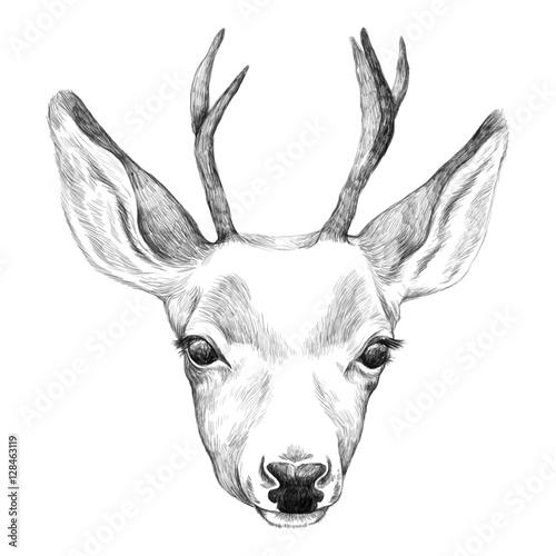 Portrait of Deer. Hand drawn illustration. - 128463119