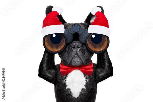 Poster santa claus christmas dog