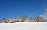árboles nevados país vasco invierno 6515-f16