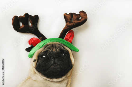 Pug dog with Christmas horns on white Poster