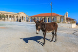 Donkey in front of st. Andrews monastery (Apostolos Andreas Manastiri) on Karpas peninsula, Cyprus