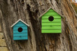 Two bird's houses on the old big tree