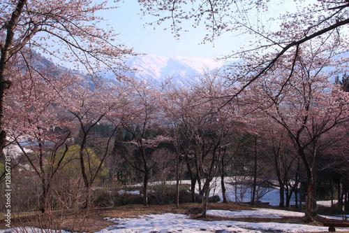 Poster 小国町 飯豊梅花皮荘 桜公園