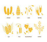 Cereal grains vector icons. rice, wheat, corn, oats, rye, barley - 128575394
