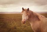 Vintage wild horse