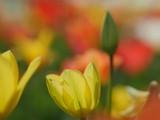 Macro of bright flowers