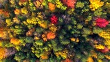Looking Straight Down on Autumn Colors, Trees, Scenic Forests