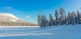 Sunny Panoramic Landscape of Northern Winter Nature