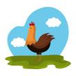 chicken animal farm in the field vector illustration design