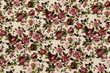 Colorful Cotton fabric in vintage rose pattern for background or - 128831518