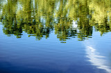 Forest trees reflected in water of pond in summer time, a lot of space for text, copyspace