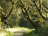 Green Enchanted Forest Sunlit Trail