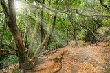 Tropical forest in Anaga, Tenerife, Canary island, Spain.