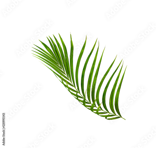 Aluminium Palm boom Green leaves of palm tree isolated on white background