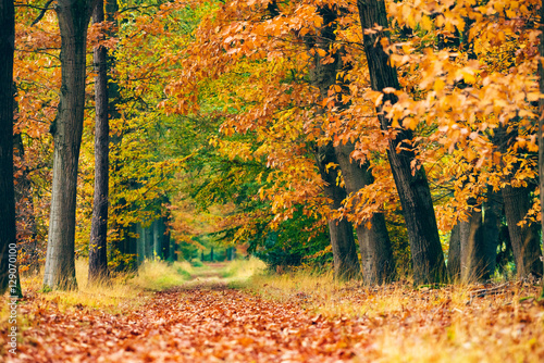 Plagát Path covered with leaves in autumn forest.