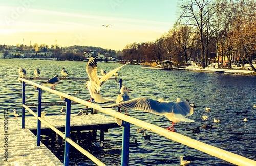 ptaki na barierce na moście