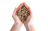 Wood pellets in hand