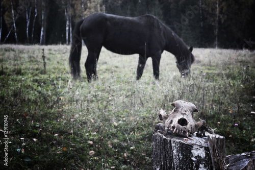 Poster Skull on a background of the horse the messenger of death