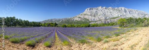 Keuken foto achterwand Lavendel Mount sainte Victoire and lavender