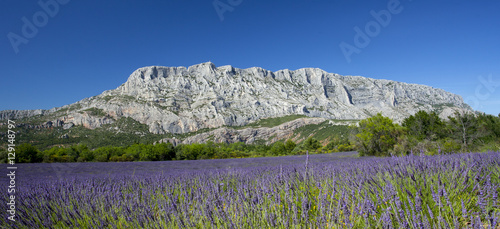 Fotobehang Lavendel Mount sainte Victoire and lavender
