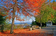 Point Defiance Park in Tacoma WA with red and orange leaves