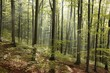 Autumn beech forest after the rain in the sunshine