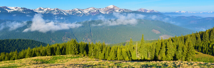 Panoramic view of spring forest in the morning