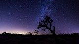 Milky Way and Joshua Tree Timelapse